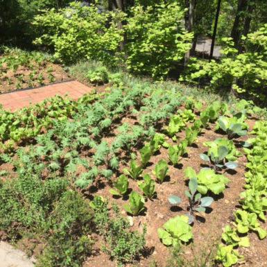 Historic Garden Week_2017g